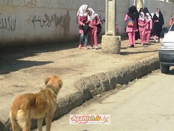 سگ ولگرد شاهین شهر