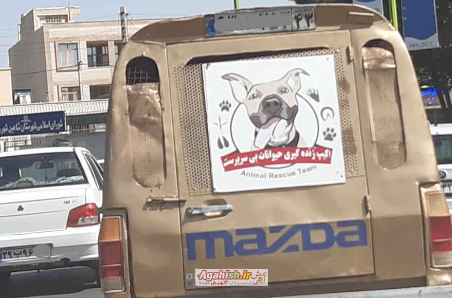 سگ های شاهین شهر